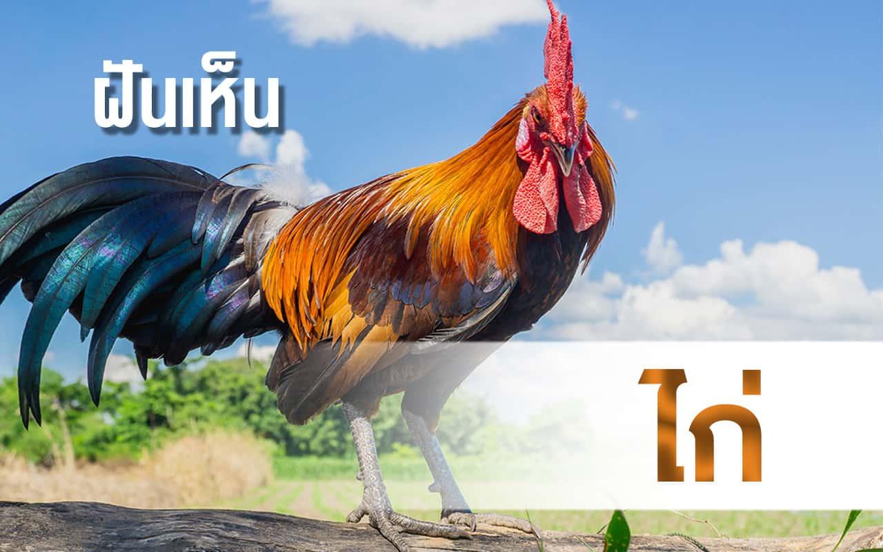 RUAY ฝันเห็นไก่ สัญลักษณ์ของคนขยันหมั่นเพียร พร้อมเลขมงคล
