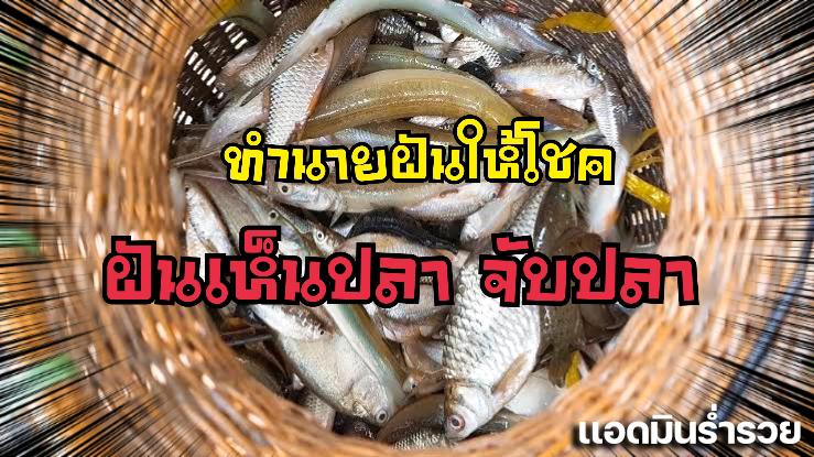 Huayทำนายฝัน ฝันว่าจับปลา ฝันเห็นปลา พร้อมตัวเลขเด็ดคอหวยห้ามพลาด!